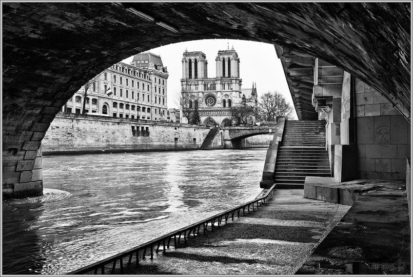 Серые розы Парижа Александра Белякова